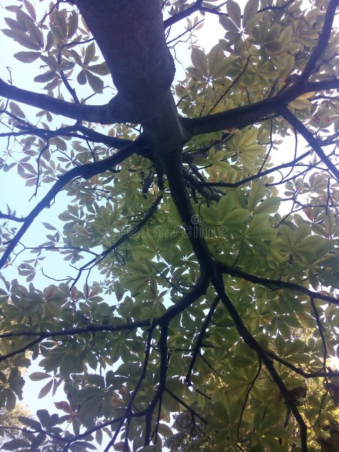 树型视图 免版税库存图片