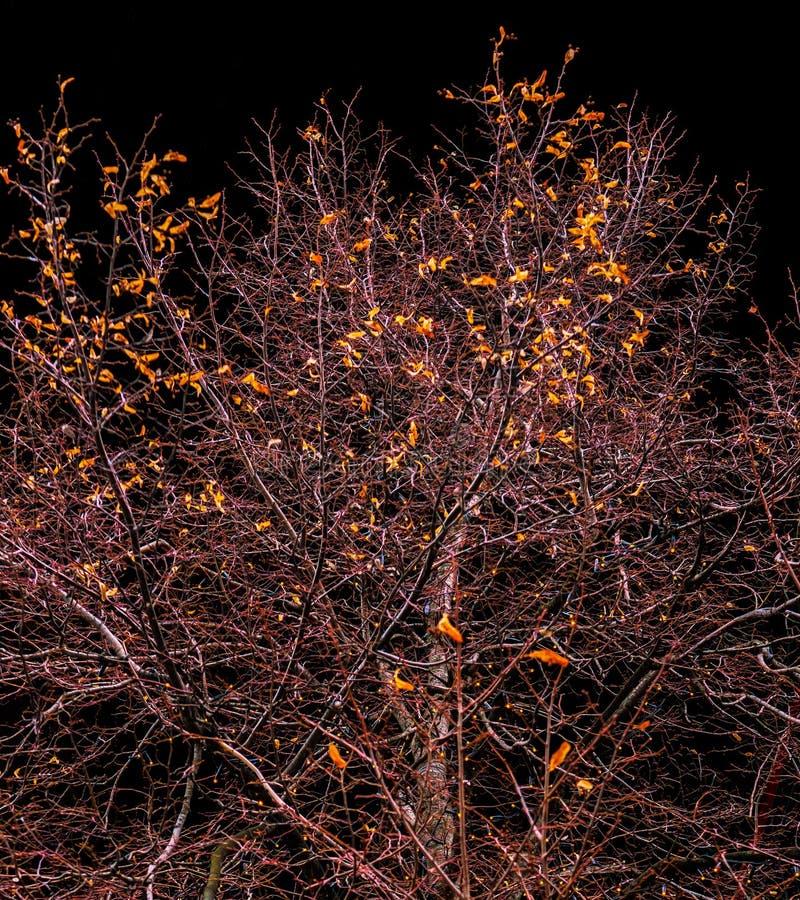 树增长反对天空 免版税库存照片