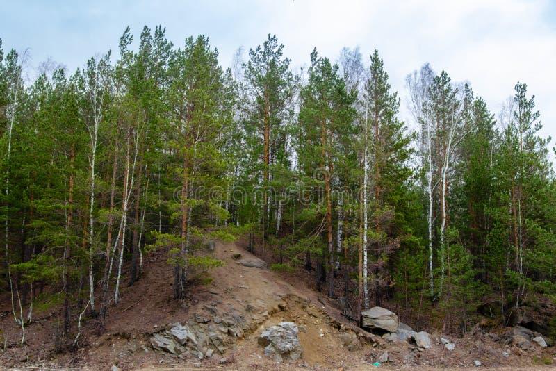 树增长在小山顶部 库存照片