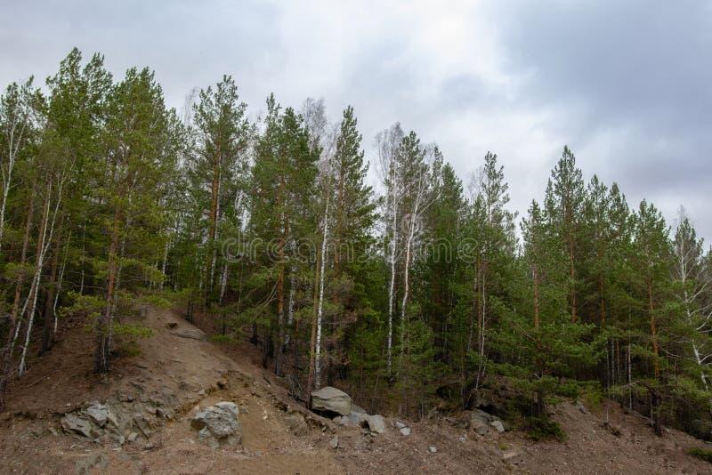 树增长在小山顶部 免版税图库摄影