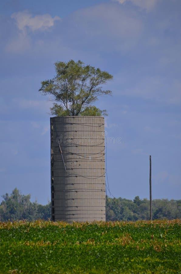 树增长在筒仓外面 库存照片