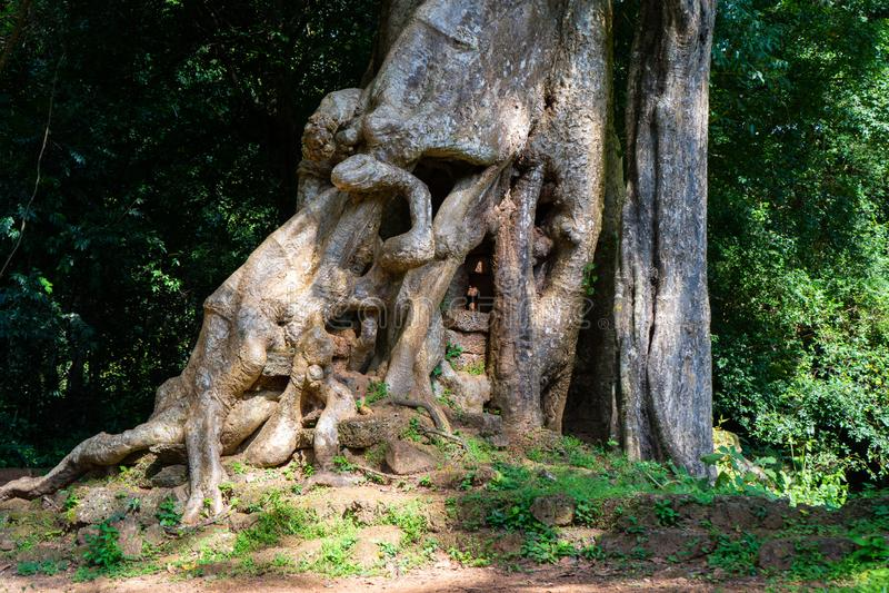 树大根在公园 图库摄影