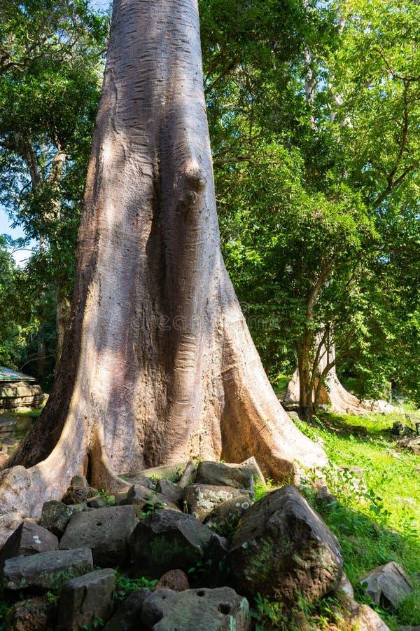 树大根在公园 免版税库存图片