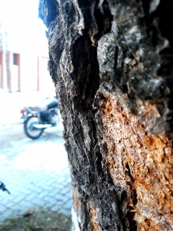 树头皮 库存照片