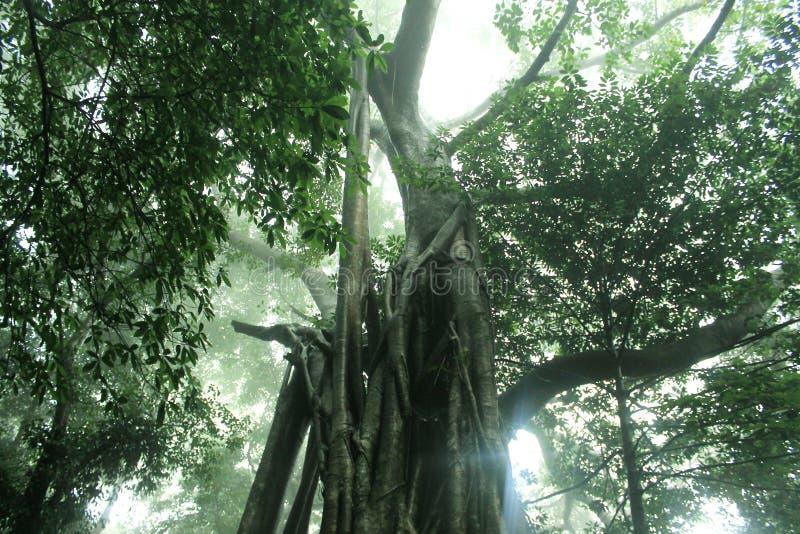 树家庭 免版税图库摄影