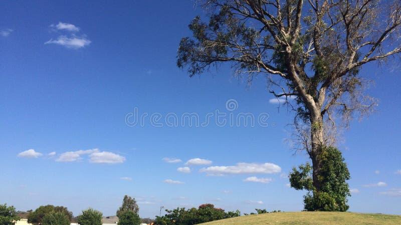 树小山蓝天 库存图片