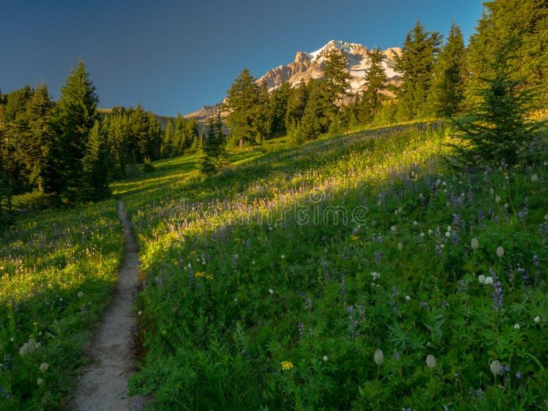 树带界线足迹通过Paradice公园 库存图片