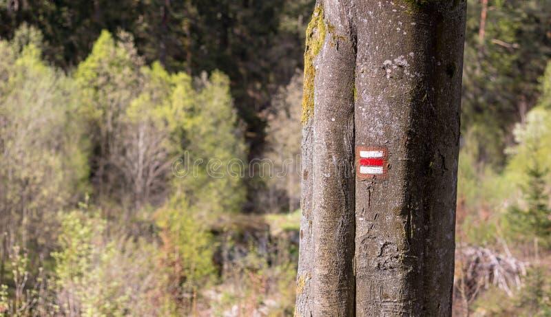 树干上有红色的远足标志 库存照片