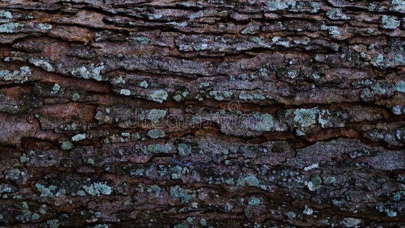 树干和地衣表面上 免版税库存图片