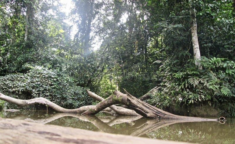 树干在密林 免版税库存图片