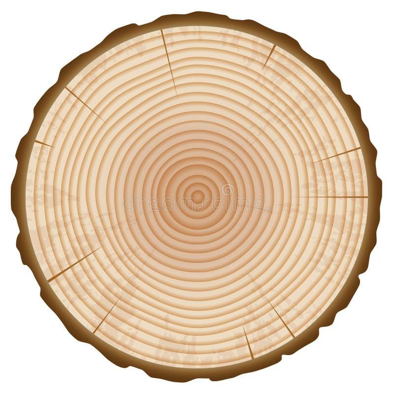 树干年轮部分 向量例证