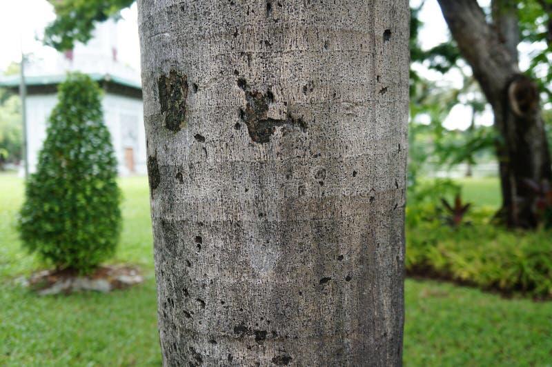 树干有被弄脏的背景 图库摄影