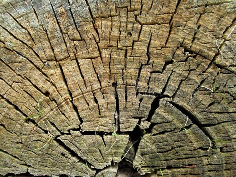 树干样式和纹理 库存照片