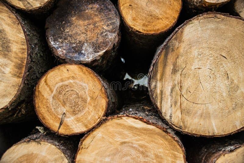 树干森林荷兰人森林 免版税库存图片