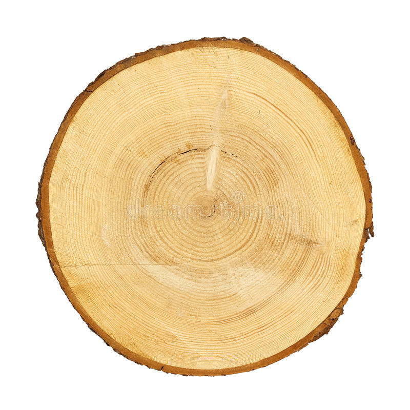 树干横断面 免版税库存图片