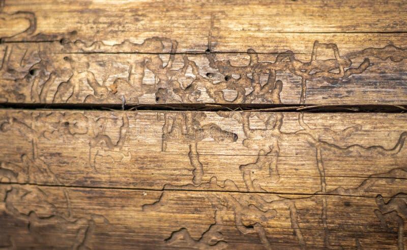 树干燥与细节的艺术样式 免版税库存图片
