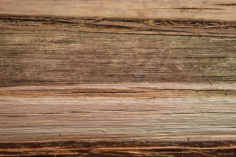 树干燥颜色样式 图库摄影