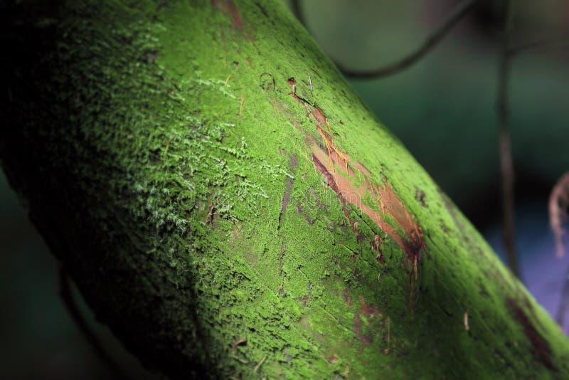 树干特写镜头与阳光的在青苔 免版税图库摄影