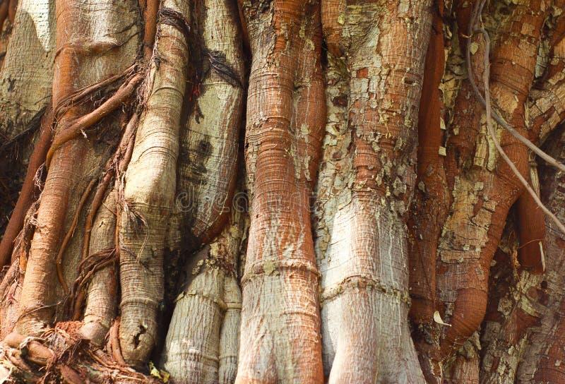 树干特写镜头  图库摄影