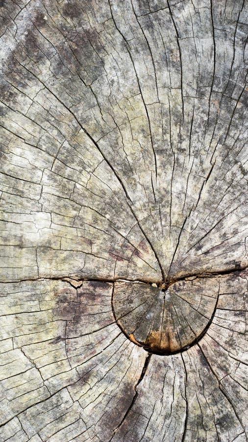 树干特写镜头 免版税库存照片