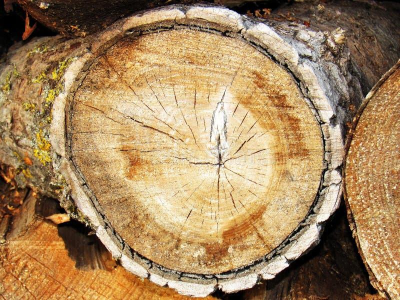 树干的末端 免版税库存照片