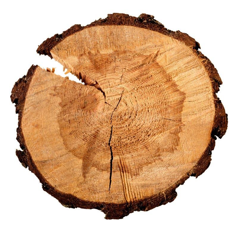 树干的横断面的每年树年轮在白色隔绝的 库存图片