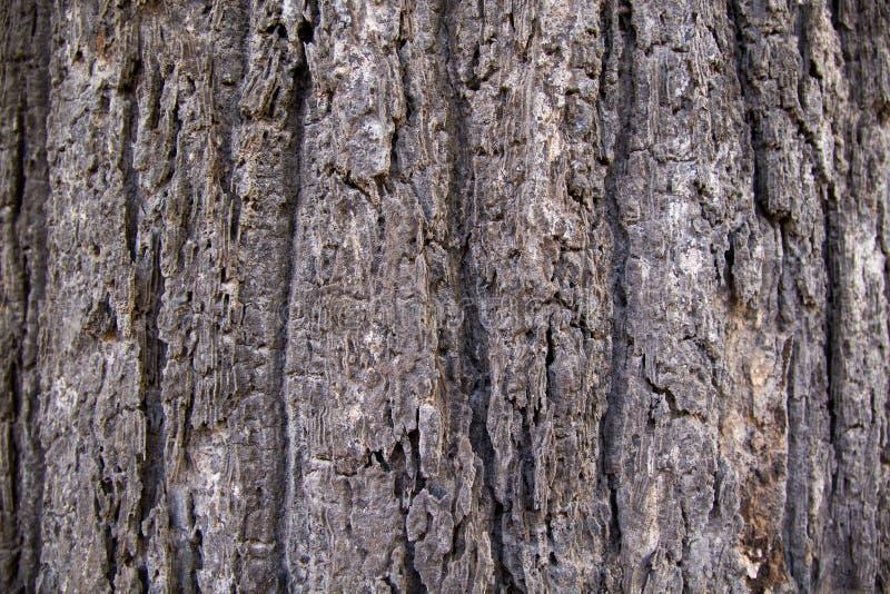 树干皮肤样式 图库摄影
