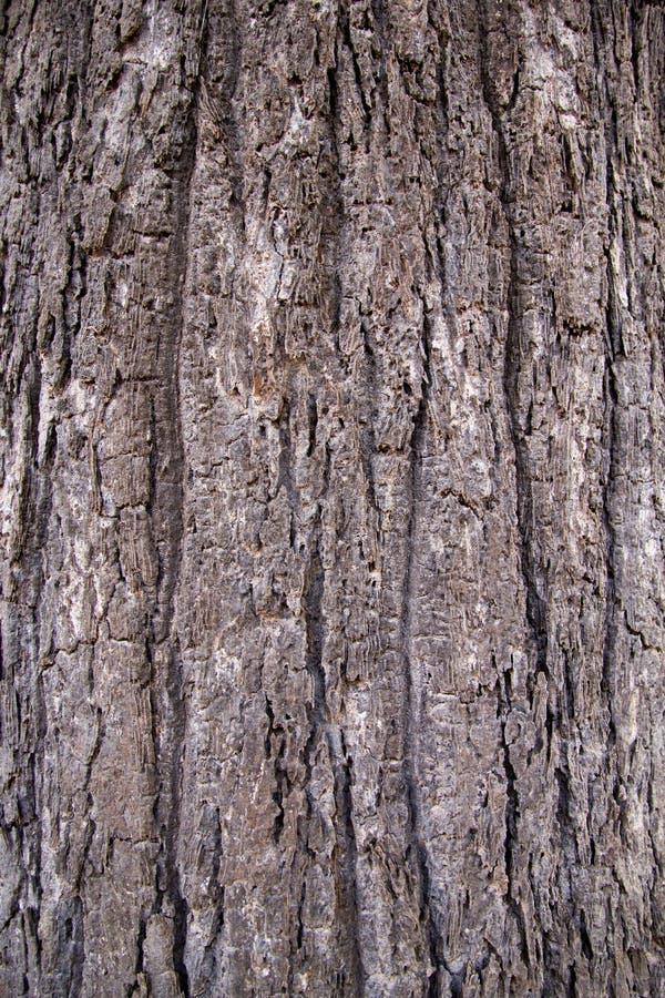 树干皮肤样式 库存照片