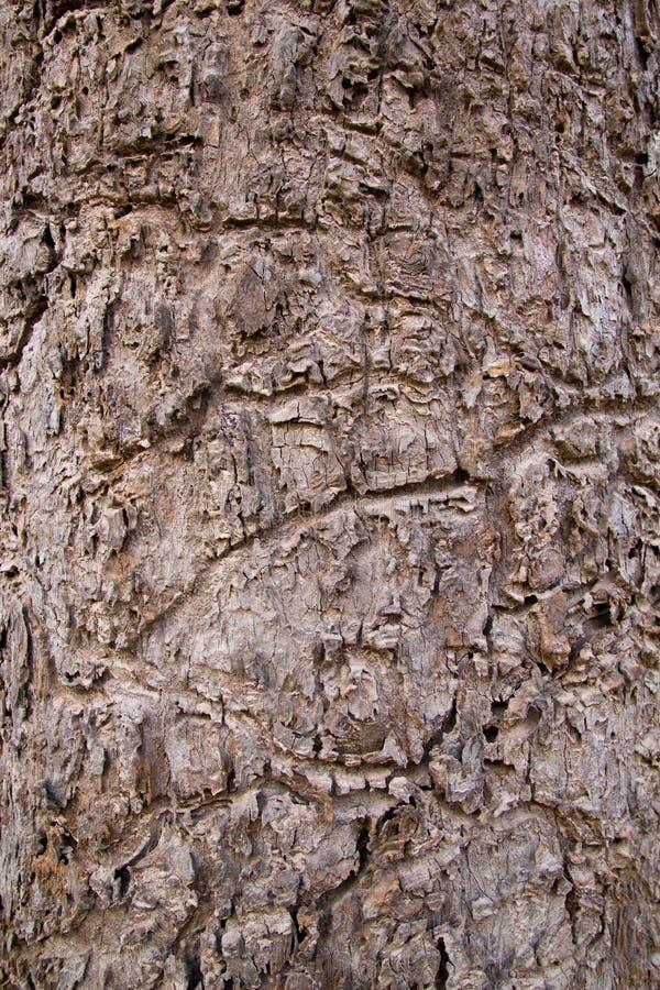 树干皮肤样式 免版税库存照片