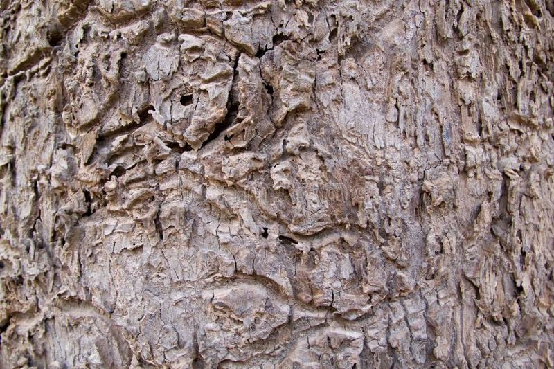 树干皮肤样式 免版税库存图片