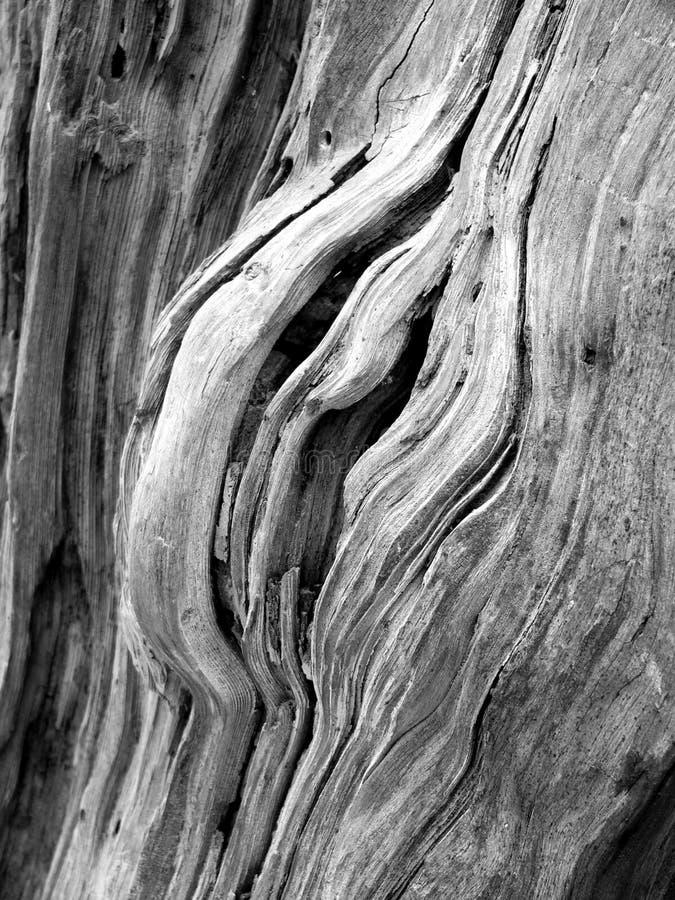 树干纹理 免版税库存图片