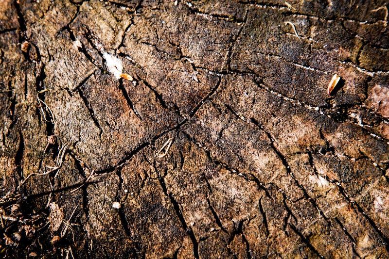 树干纹理 免版税图库摄影