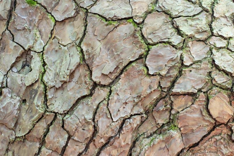 树干背景 免版税库存照片