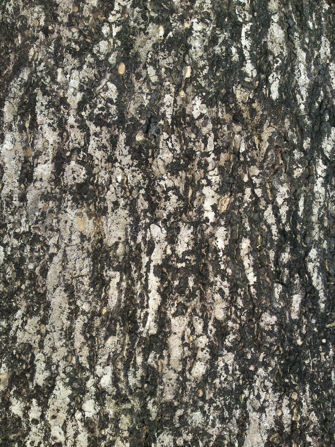 树干背景 免版税库存图片