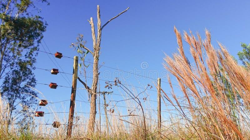 树干锯和在Natura欧卡利普图斯06 免版税图库摄影