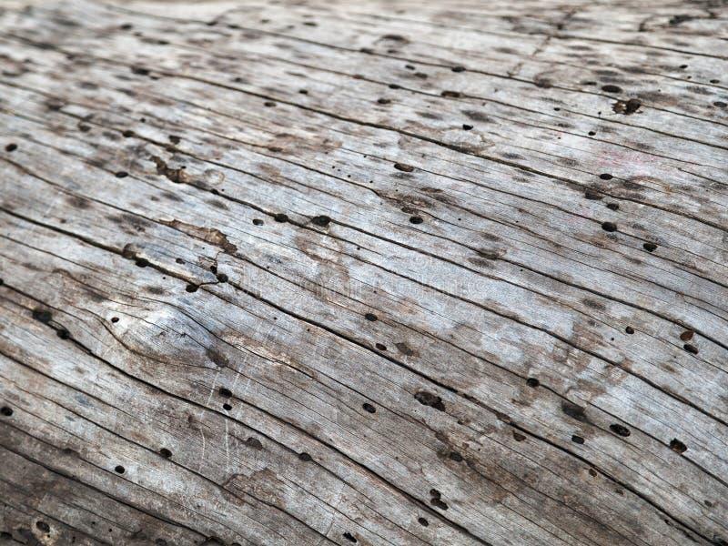树干,死的杉木外在表面自然纹理  库存照片