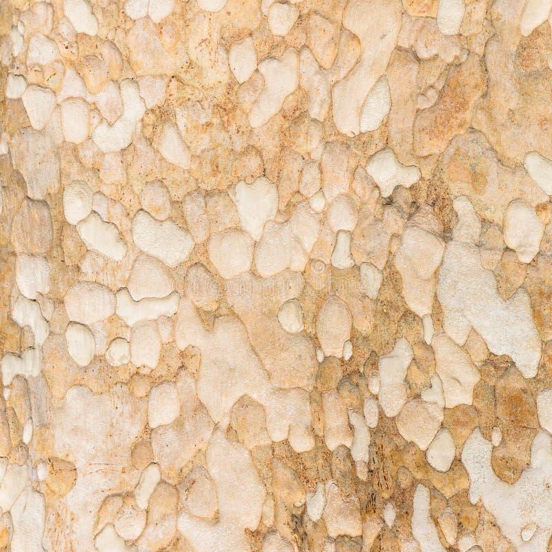 树干 免版税库存照片
