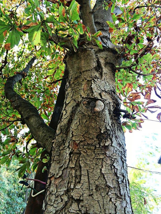 树干 库存图片