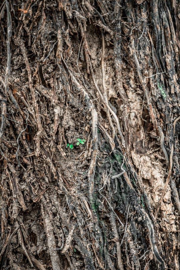 树幼木 免版税库存照片