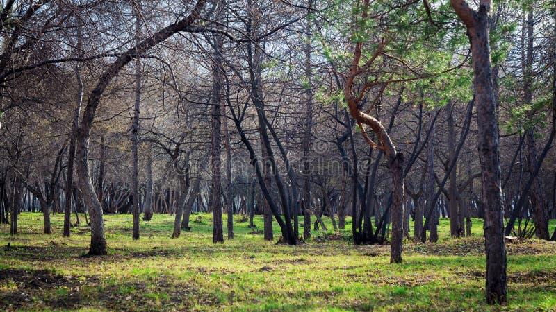 树庭院 健康生活方式和新鲜空气 r 春天、秋天和夏天 步行在绿草的公园 图库摄影