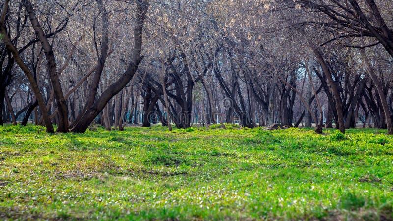 树庭院 步行在绿草的公园 健康生活方式和新鲜空气 r 春天、秋天和夏天 免版税库存图片