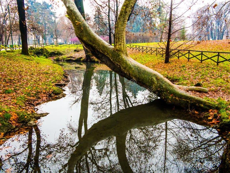 树弯曲在水 库存照片