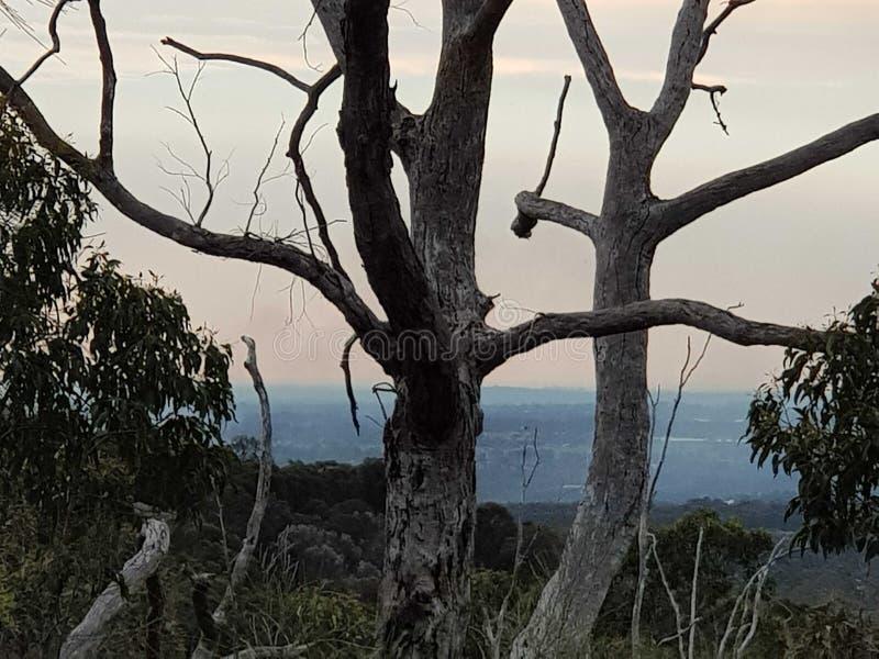 树形状 免版税库存照片