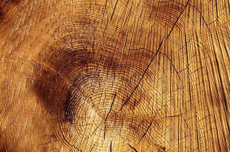 树截面图  免版税库存照片