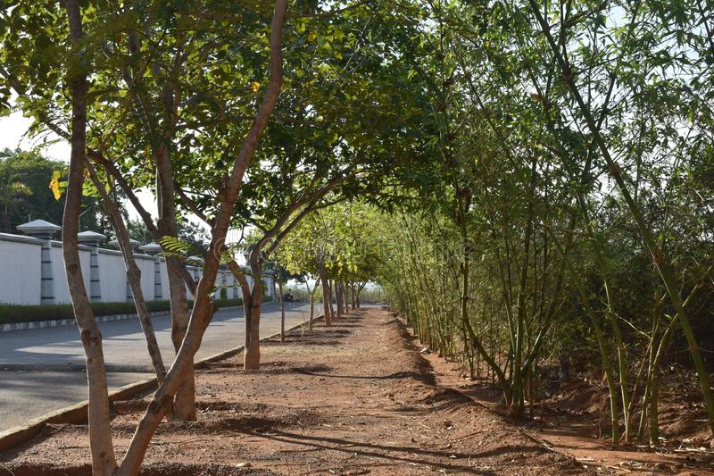 树报道了道路方式 库存照片