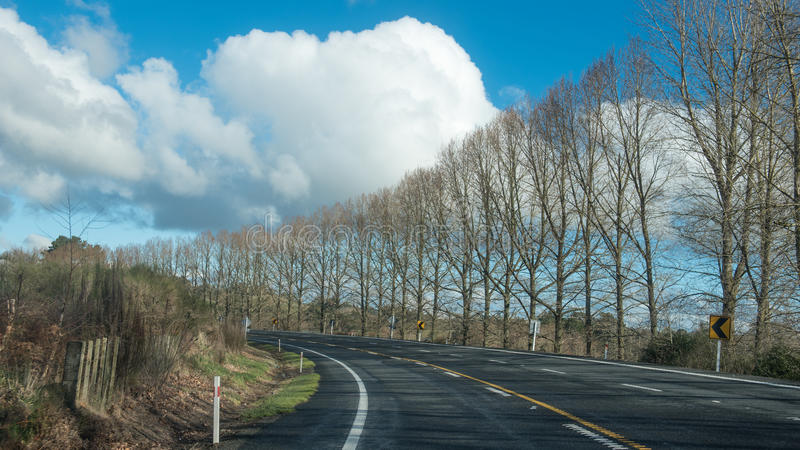 树排行了弯曲到左边的路在多云天空下 免版税库存图片