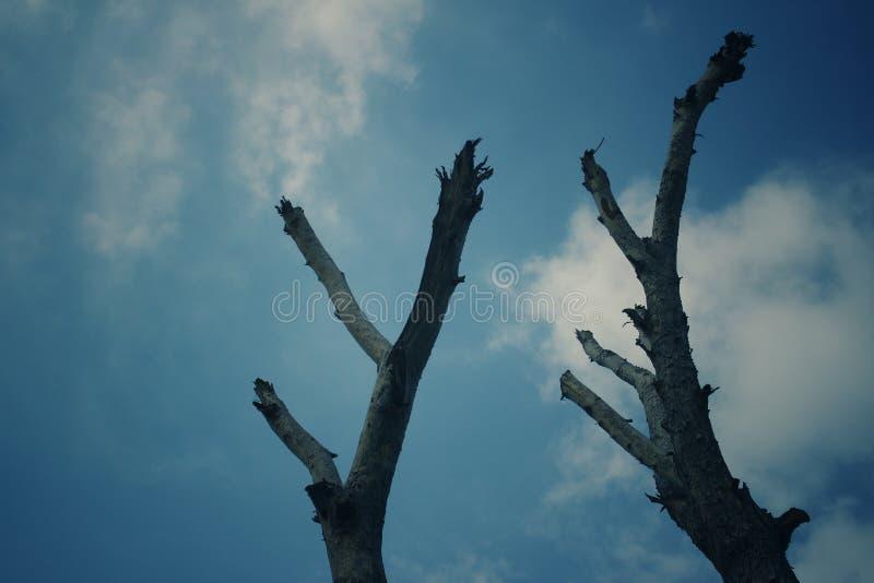 树摆在 图库摄影