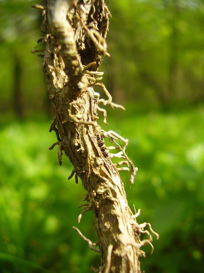 树放大绿色森林 免版税图库摄影