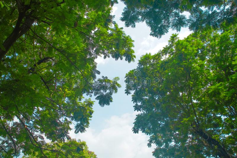 树方式  免版税图库摄影