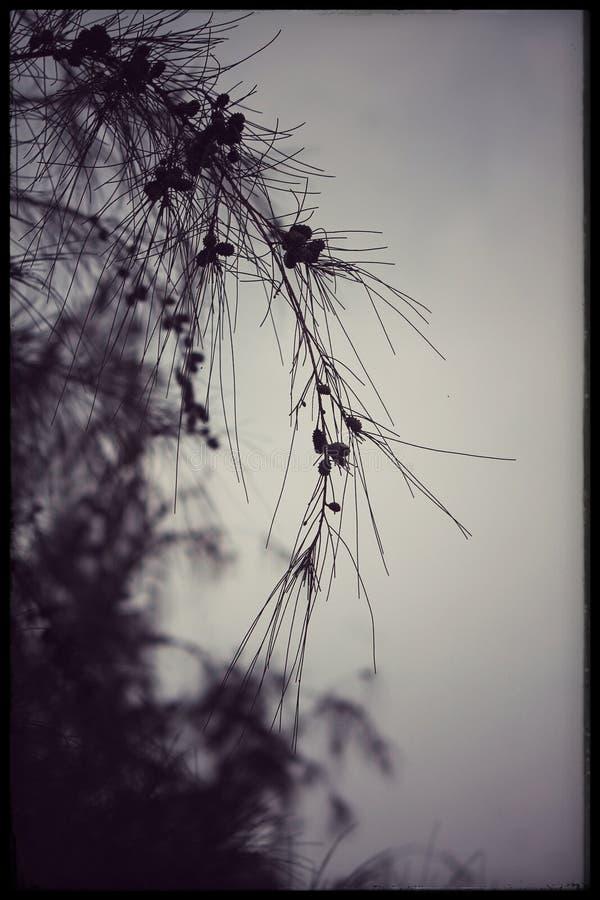 树晚上季风 库存照片